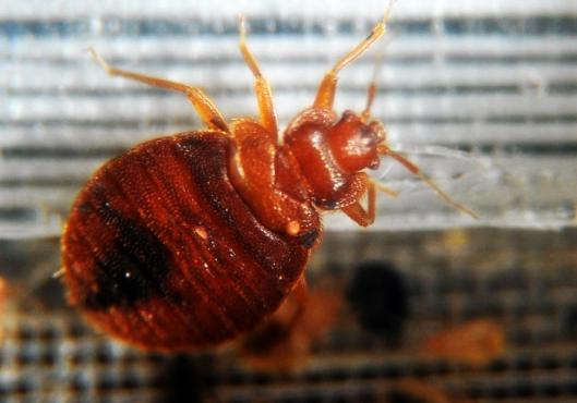 us-health-bed-bugs-files